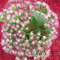 Changer sa ma passion pour les fleurs